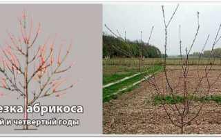 Тонкости и правила обрезки абрикосовых деревьев
