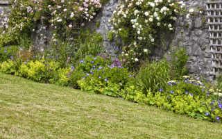 Изящные названия — изящные цветы. 9 лучших сортов плетистых роз, приспособленных к выращиванию в средней полосе России