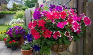 Уличные цветы: особенности самостоятельного выращивания