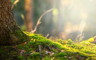 Способы избавления от мха — маленького зеленого вредителя