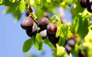 Осенний уход за садом: нужно ли поливать плодовые растения осенью