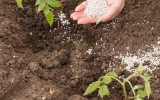 Как правильно удобрять помидоры для получения богатого урожая