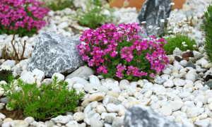 Какие виды почвопокровных растений можно использовать для создания альпийской горки