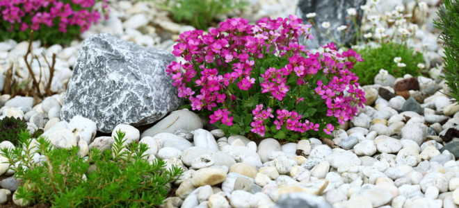 Почвопокровные растения — создаем альпийскую горку