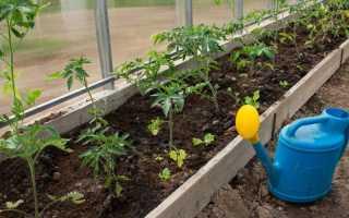 Какие подобрать семена помидоров и не ошибиться
