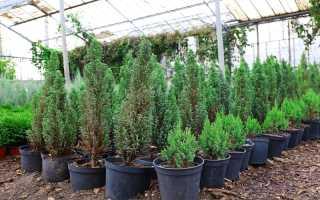 Многолетники для миниатюрного сада: компактные растения, не занимающие много места