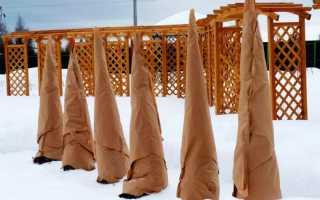 Чем укрыть деревья на зиму