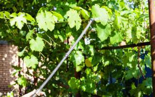 Обработка винограда осенью: виды обработки, препараты на «вооружении» у дачников