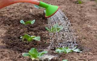 Грамотный полив почвы