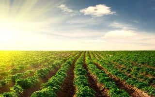 Ранний картофель — это аромат и вкус лета, уникальный и неповторимый. Рассказываем про 8 интересных сортов