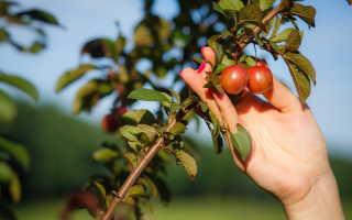 Правильная подкормка саженцев плодовых деревьев весной, все плюсы и минусы