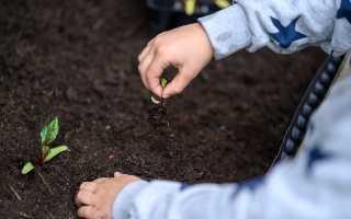 Когда рассада «переедет». Простые советы, которые упростят жизнь занятых огородников
