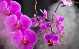 9 способов быстро и надежно погубить орхидею