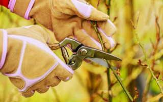 Как обрезать розу перед зимовкой, чтобы холода не нанесли красавице никакого вреда