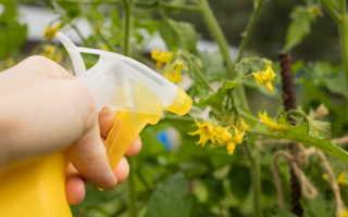 Не цветут помидорные кусты в теплице — что делать огороднику?