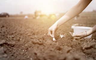 Как получить хороший урожай на глинистой земле