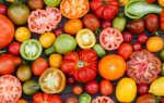 Секреты богатого урожая томатов: как добиться богатого урожая и получить здоровые плоды. Простые советы от опытных садоводов