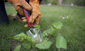 Эффективные способы борьбы с сорняками
