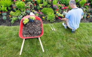 Как правильно оформить цветник из многолетников