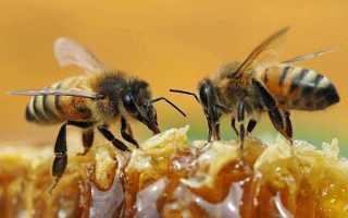Сахарный сироп для осенней подкормки пчел