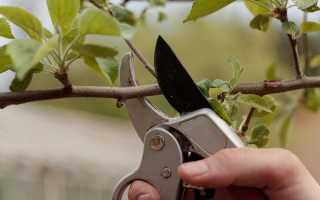 Процесс обрезки яблони весной, примеры на видео