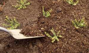 Мульчирование почвы: суть, преимущества использования и применение