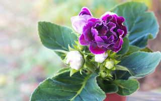 5 цветущих растений, требующих предварительного проращивания
