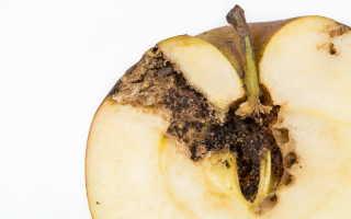 Вредные для сада насекомые. Зима — идеальное время для борьбы
