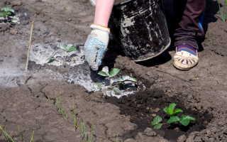 Древесная зола для садовых культур: как приготовить удобрение