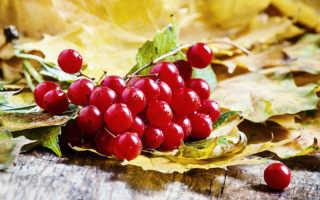 Калина красная — выращиваю красоту и пользу на своем участке: правила и особенности посадки