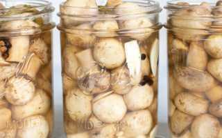 Полакомьтесь уникальным блюдом русской кухни: как осуществить засолку грибов