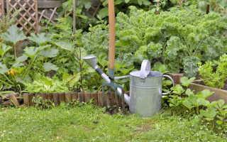 Грамотный полив огородных культур. Рекомендации опытных дачников