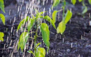 Прикорневой полив растений с помощью пластиковых бутылок