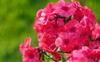 Виды многолетних растений для красивого цветника