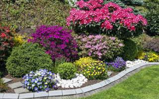 Шикарный цветник до поздней осени: 7 красочных растений