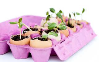 7 способов использования яичных лотков на даче