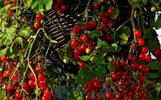 Дизайн вашего сада: огород в цветочном горшке