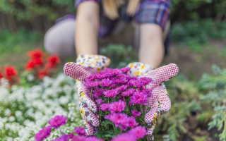 5 способов превратить заросший дерном участок в образцовый огород