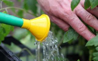 Оказывается, томаты надо уметь поливать правильно — рассказываем, как это надо делать