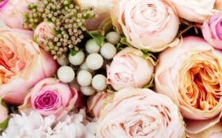 Секреты от флориста — продлеваем жизнь срезанным цветам