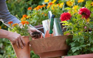 Привлекательные многолетние растения, способные украсить любой садовый участок