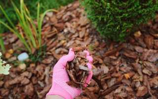 Использование опилок в саду и огороде