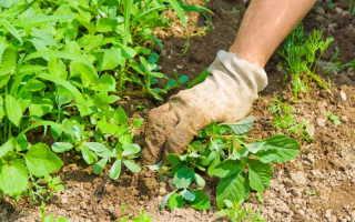 Польза и вред от сорняков. Методы борьбы