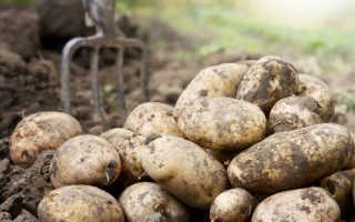 Что посадить на грядке после картофеля