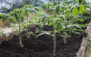Чем наполнить лунки при посадке рассады томатов