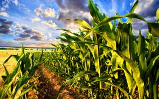 7 секретов создания высокодоходного огорода