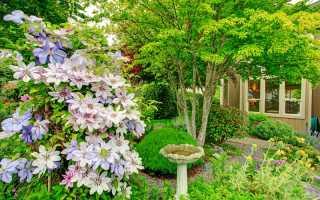 Идеи для оформления двора частного дома