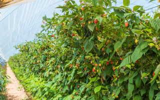 Удобрения для малины летом: чем подкармливать кусты в июле