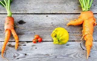 Почему растет кривая морковь и как это исправить