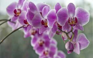 Выращивание орхидей в стеклянных кашпо